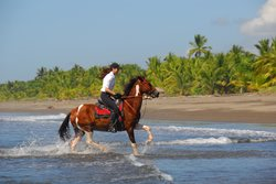 The Riding Adventure