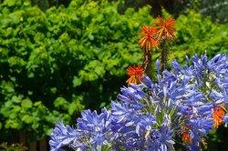 Berrima Motel - Flowers