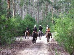 Tales of the Trail Western Ranch Trail Rides