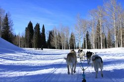 Snow Buddy Dog Sled Tours