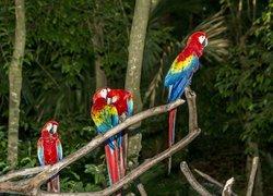 Xaman Ha Aviary