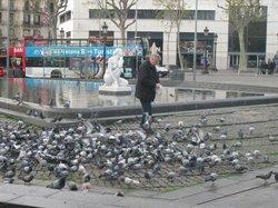 В 100м от отеля можно подкормить голубей.