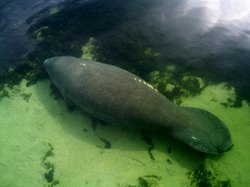Majestic Manatee Tours - Day Tours