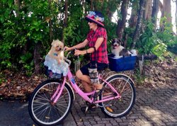 Northern Beaches Bike Hire