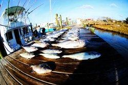 Matador Sport Fishing Charters
