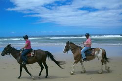 Sahara Trails Horse Riding and Farm Stays