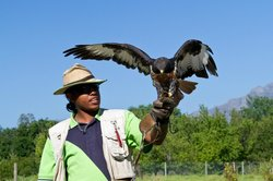 Eagle Encounters, Stellenbosch, South Africa