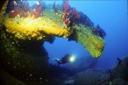 Hippocampe Diving Center
