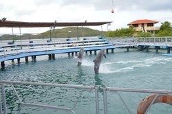 Dolphinarium, Cayo Naranjo