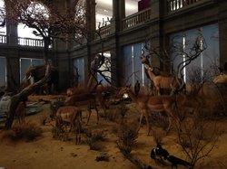 Zoologisches Museum Konig