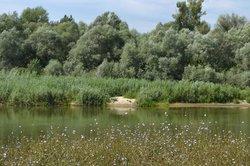 Voronezh State Nature Biosphere Sanctuary V.M. Peskova