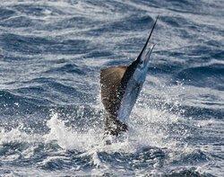 Los Amigos Sportfishing