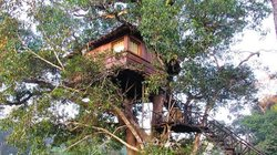tree house a must stay!