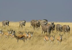 Namibia Tours & Safaris