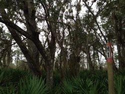 Hickey's Creek Mitigation Park