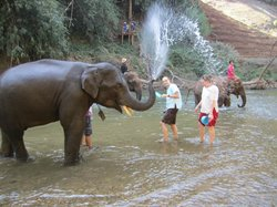 Elephant Home - Day Tours