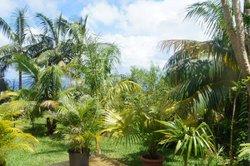 Le Palmier auberge paysanne
