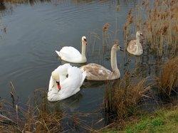 St Aidan's RSPB reserve