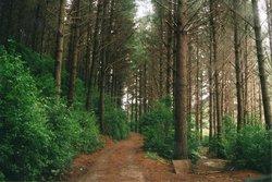 Akatarawa Forest