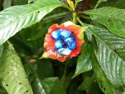 Sarita Colonia Medicinal Garden