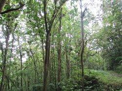 Edmund Forest Reserve