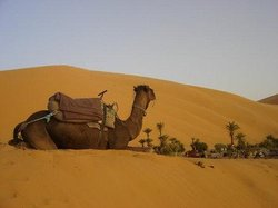 Over Morocco Tours