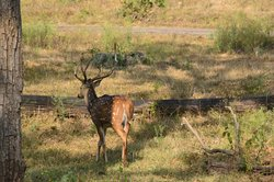 Madumalai Wildlife Sanctuary