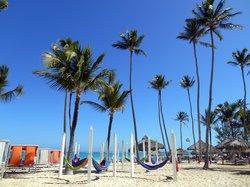 Playa, vista al mar, lleno de palmeras
