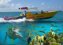 Island Snorkeling Adventures