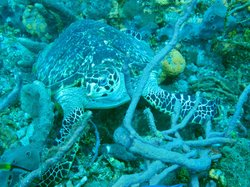 Wild Turtle Scuba Tobago Ltd.