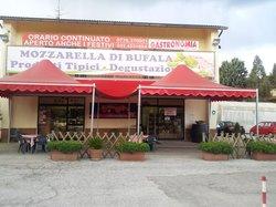 Casearia