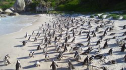 Tour Guide South Africa - Day Tours