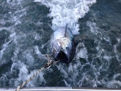 Island's End Tuna Charters -Private Day tours
