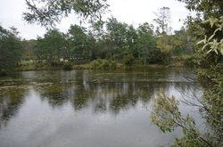 Warrawee Forest Reserve