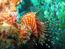 Kiwidiver Dive Centre