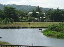river with the carabao within the resort