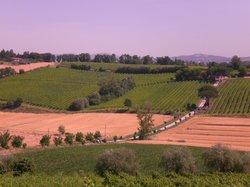 Agricola Mariotti - Food Farm