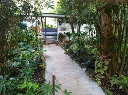 Sivananda Ashram Yoga Retreat Bahamas