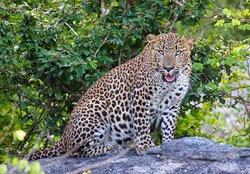 Yala Green Safari Tours