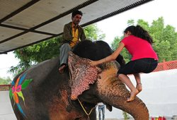 Elephant Voyage Travel