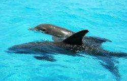 Snorkel Panama City