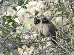 Bulbuls whose singing is a perfect sound to start the day