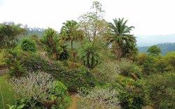 surrounding garden