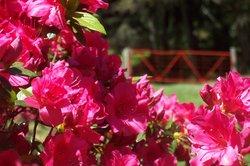 Benvie Garden