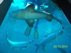 Konger Tarpon Springs Aquarium