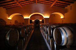 The Best Portugal - Wine Tours