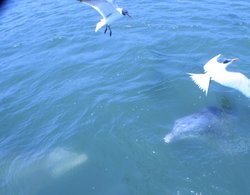 Sharkin Charleston/Dolphins of Charleston