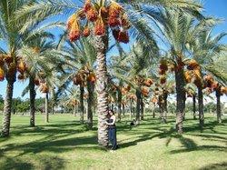 Segs Segway Tours, Haifa