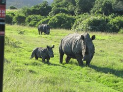 Sibuya Game Reserve - Private Day Trips
