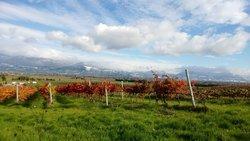 Wineinvilla